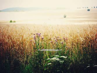 field of innocence by ProZombie