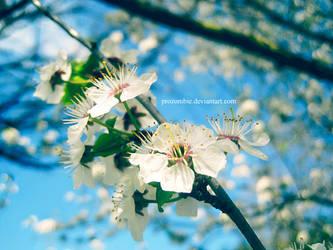mirabelle blossoms: four by ProZombie
