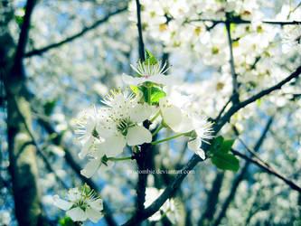 mirabelle blossoms: five by ProZombie