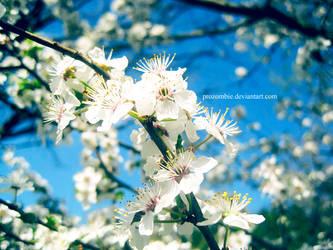 mirabelle blossoms: seven by ProZombie