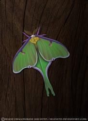 Luna Moth by selene713
