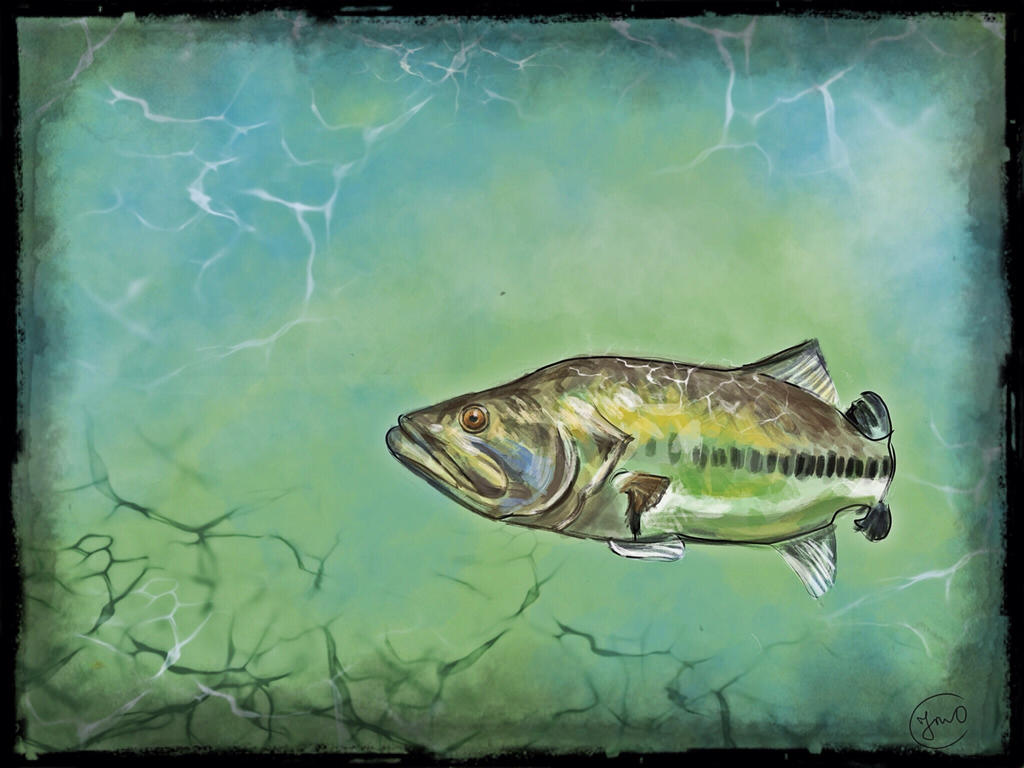 Edited Big Mouth Bass 1 By Dinglidale On Deviantart
