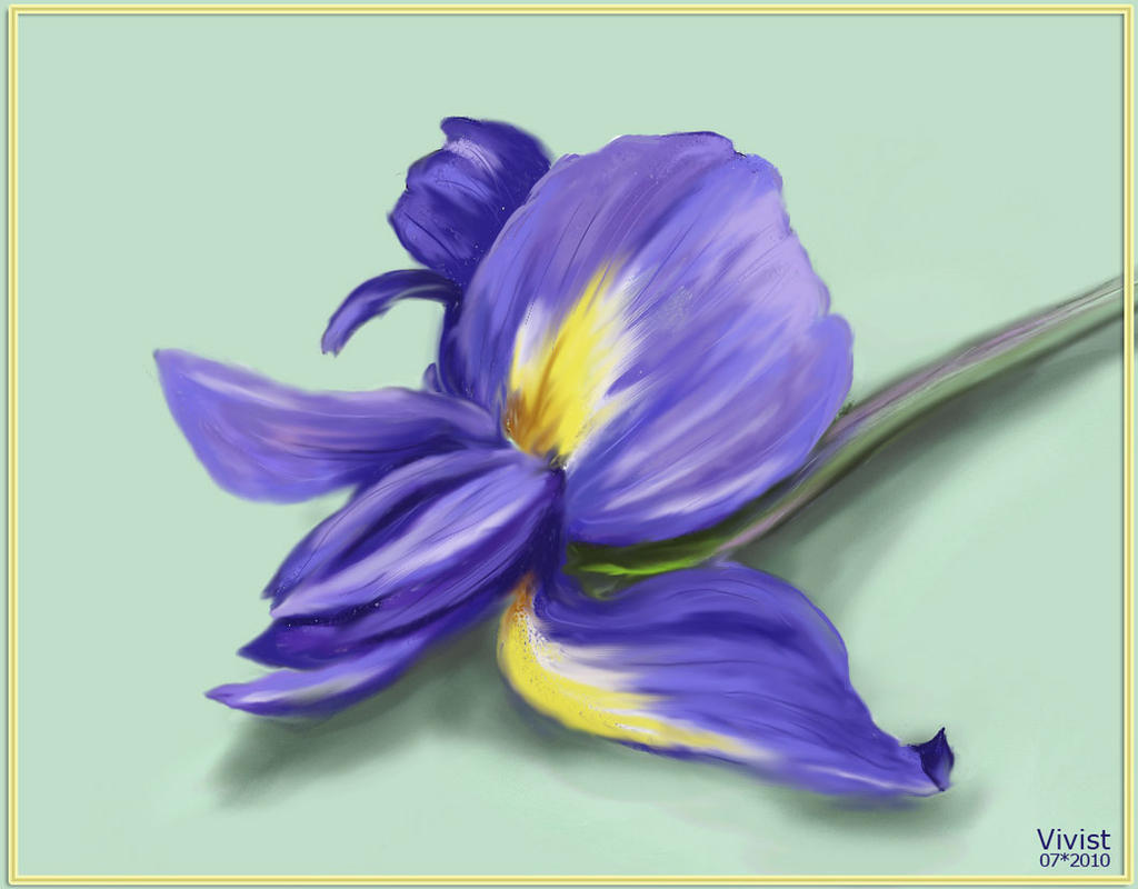 Iris flower by vivist on deviantart iris flower by vivist iris flower by vivist izmirmasajfo