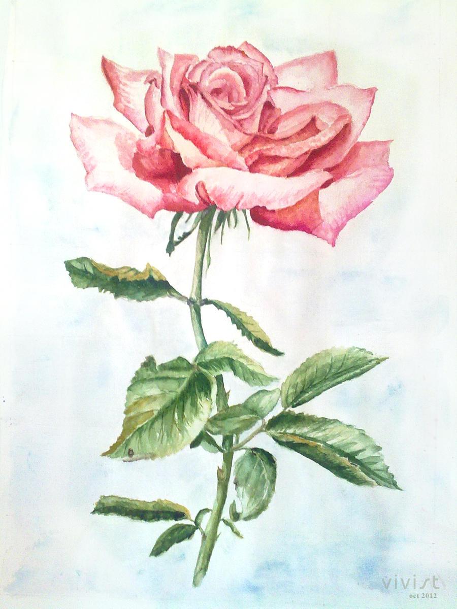 Pink rose by vivist
