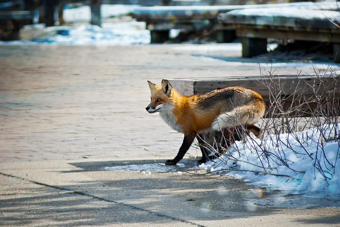 Snow Fox by xxdigipxx