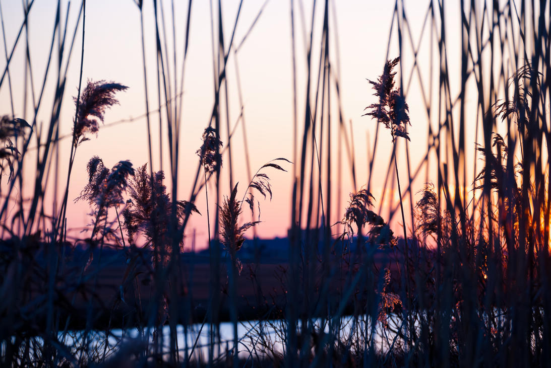 Atlantic City tidal marsh by xxdigipxx