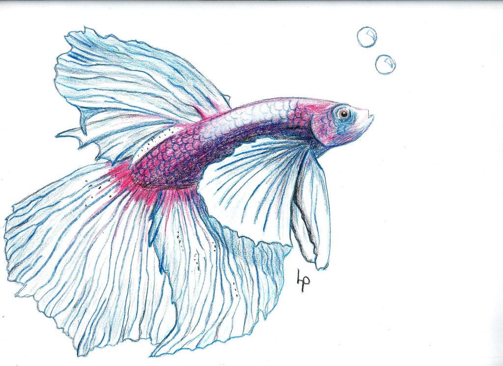 Betta Fish by nico-wally on DeviantArt