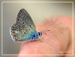 A butterfly for you he said by Lentekriebel