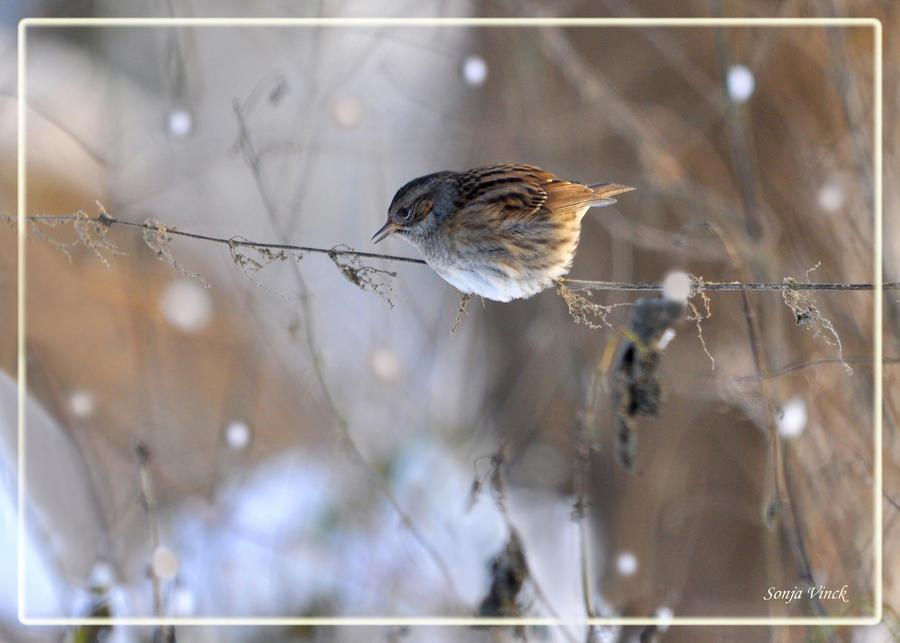 Prunella's wintersong by Lentekriebel