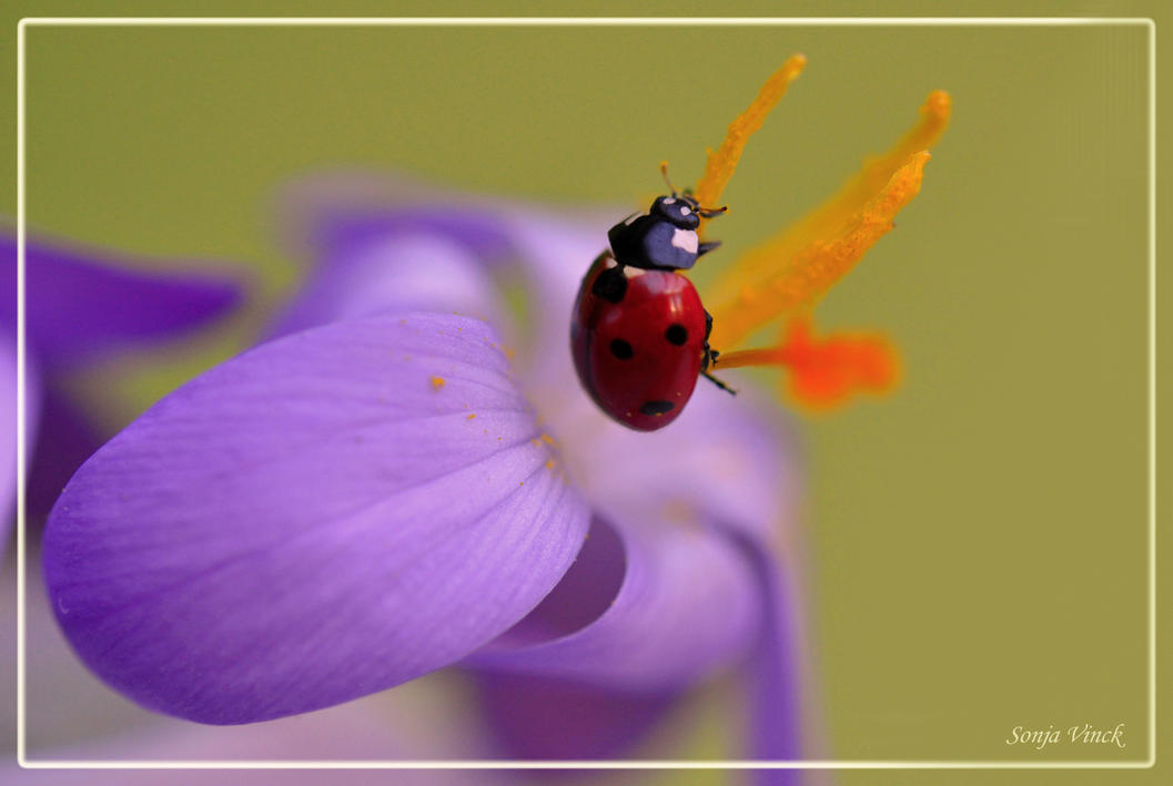 Springtime crazy by Lentekriebel