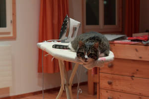 Cat on a ironing Board by Kalabint