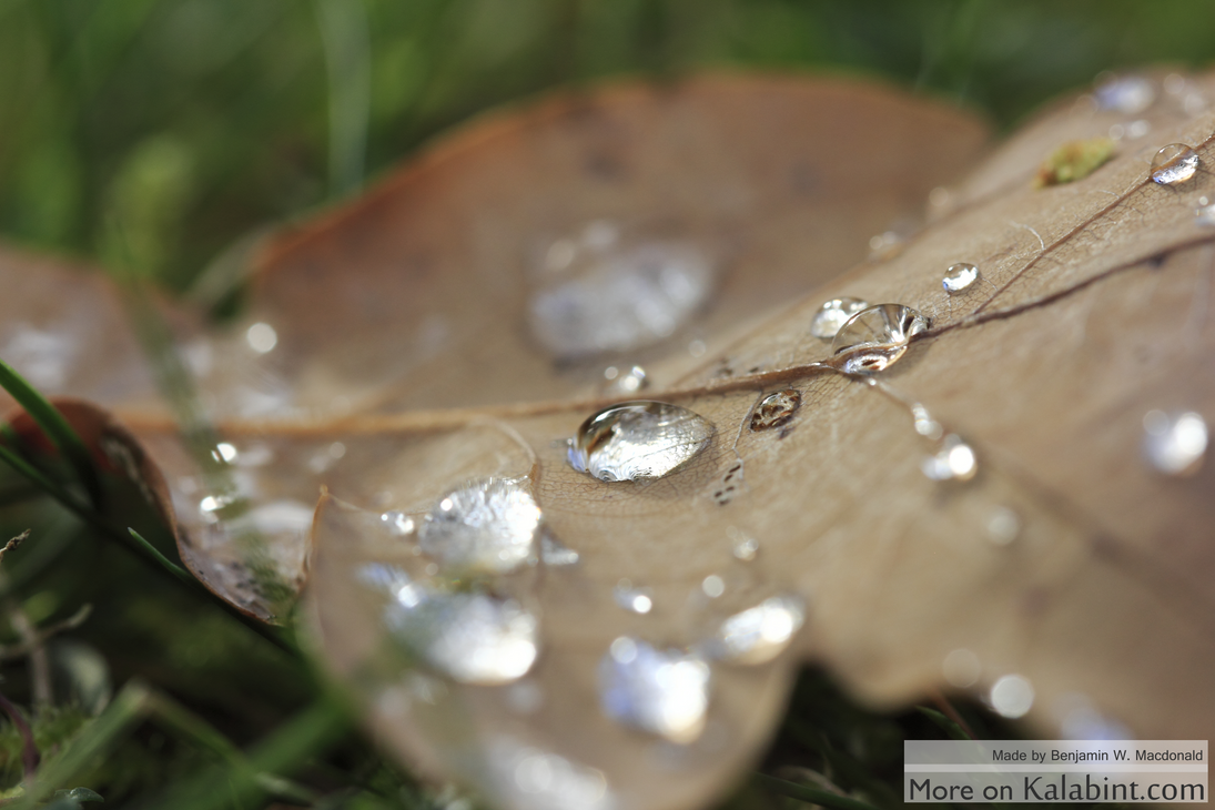 Morningfeeling with Waterdrops by Kalabint
