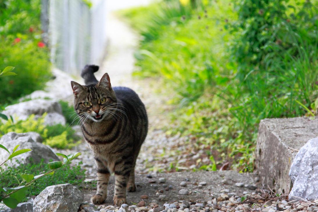 Miau! by Kalabint