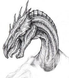 dracco by uialwen