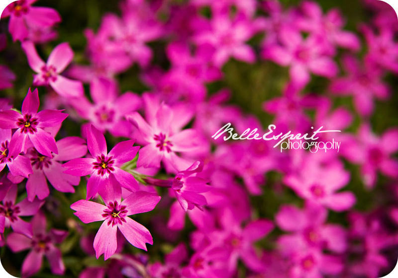 Pink Flowers by BelleEsprit