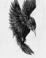 Bird. by logi-marshal