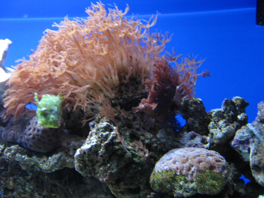Find the fish in this photo by iamangel624 on deviantart for What kind of fish am i
