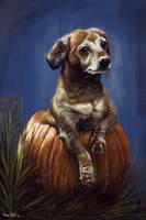 Pumpkin by ArtofOkan
