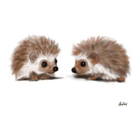 Little hedgehogs by ArtofOkan