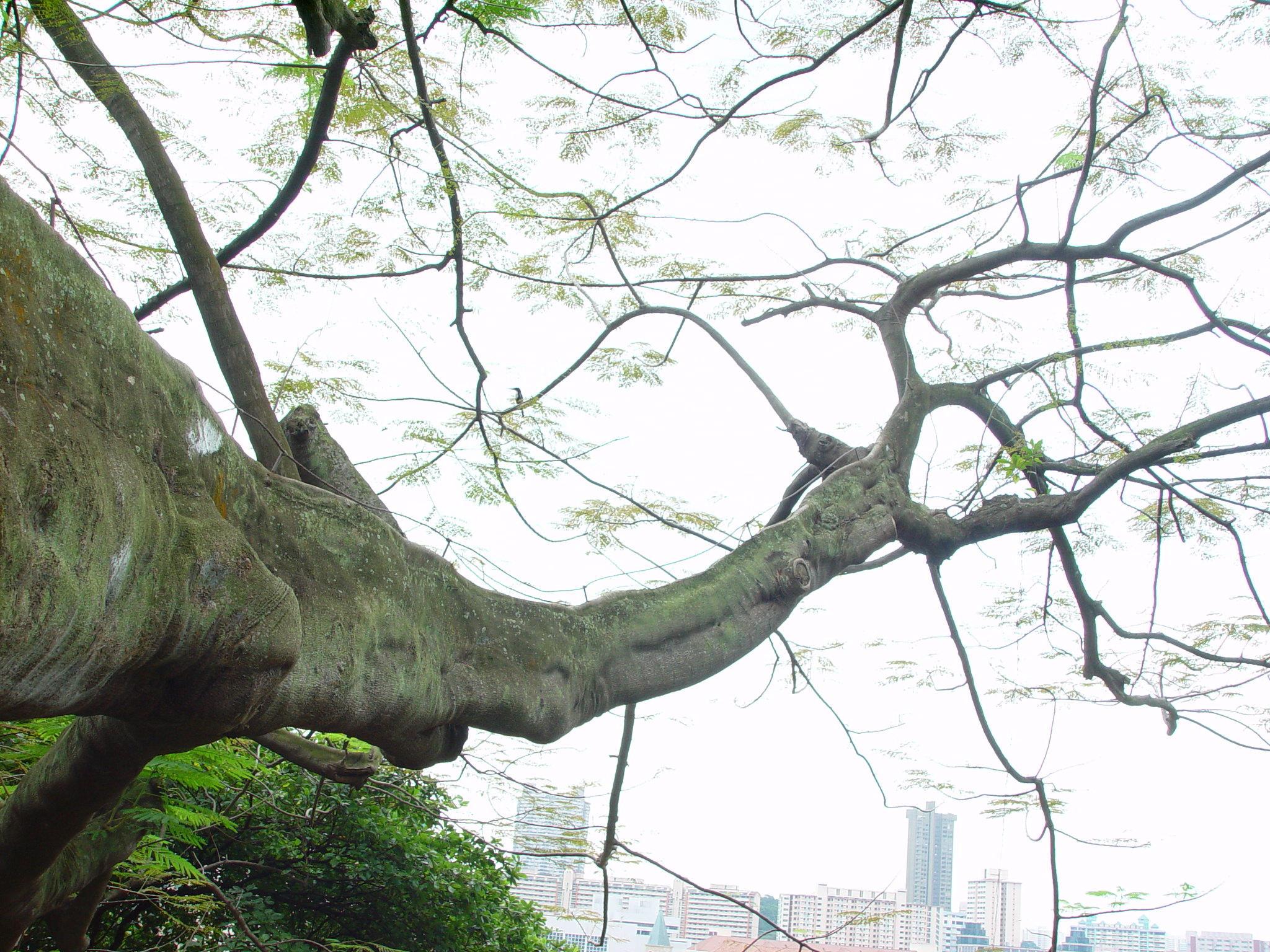 Tree Branch Joy Studio Design Gallery Best