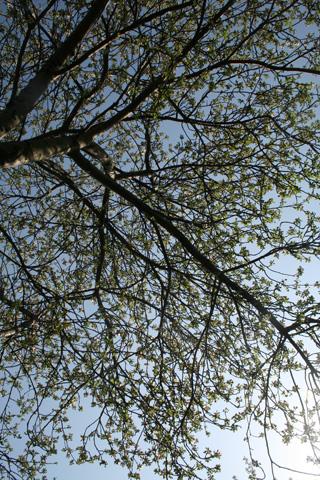 tree by toni4bologna
