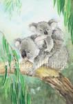 Koala and Child