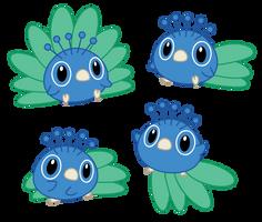 Little Peacock