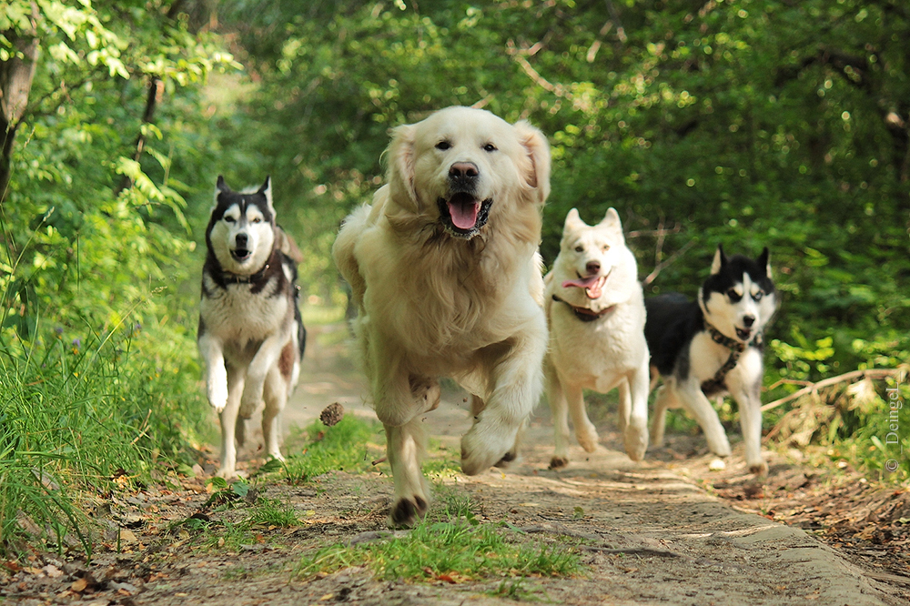 Incredible team by DeingeL-Dog-Stock