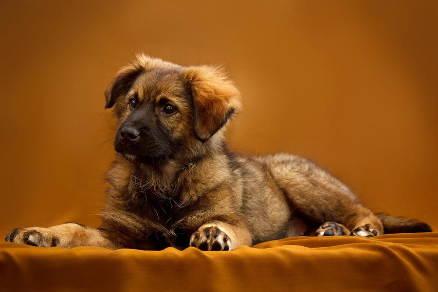 Puppy by DeingeL-Dog-Stock