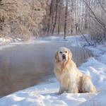 The frosty morning by DeingeL-Dog-Stock