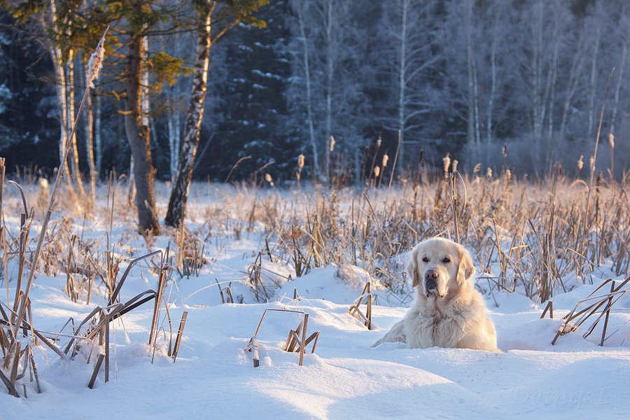 Winter holidays by DeingeL-Dog-Stock