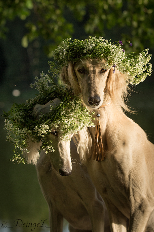 Romantic morning by DeingeL-Dog-Stock