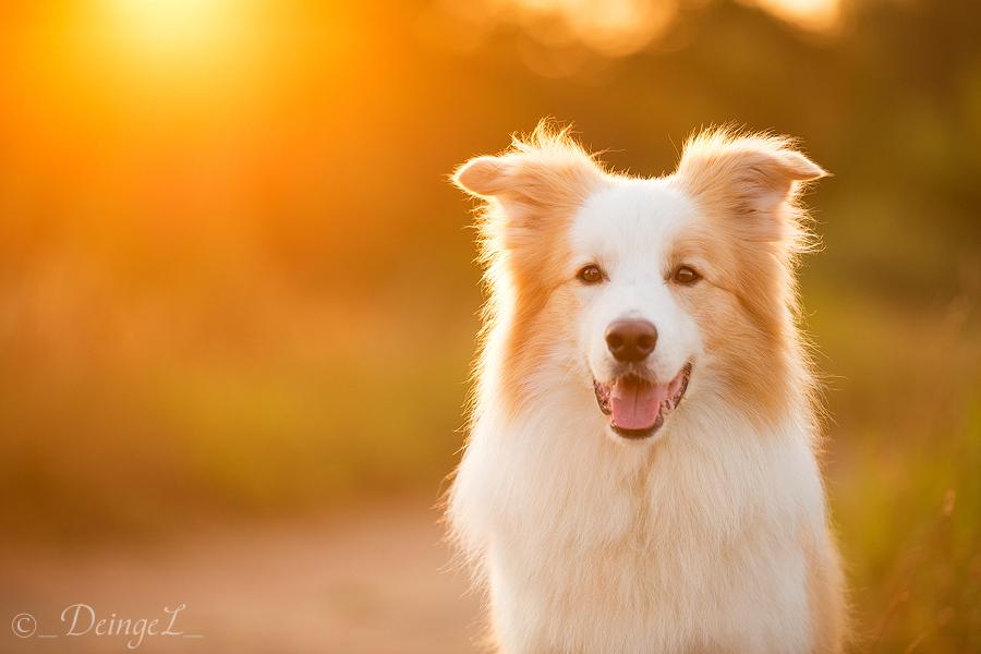 Sun Breeze by DeingeL-Dog-Stock