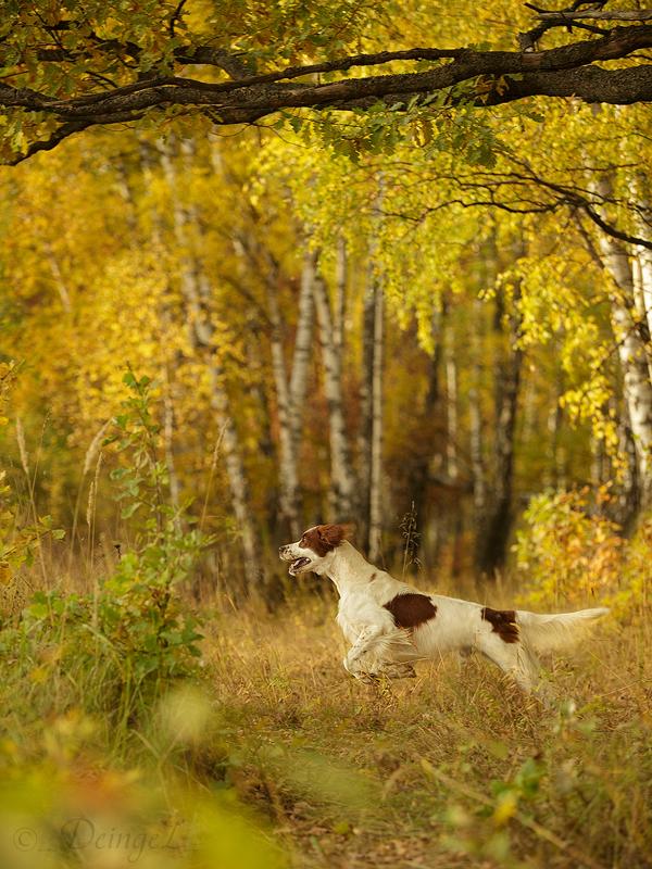 Autumn Fairy Tale by DeingeL-Dog-Stock