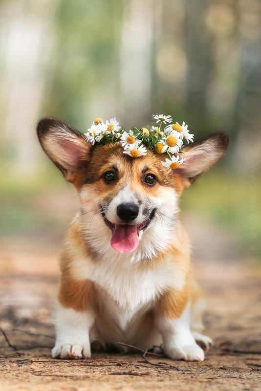 Little Cutie by DeingeL-Dog-Stock