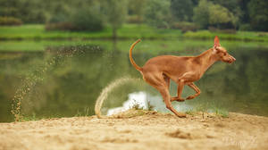 Move by DeingeL-Dog-Stock