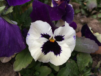 Flower by andylaser1