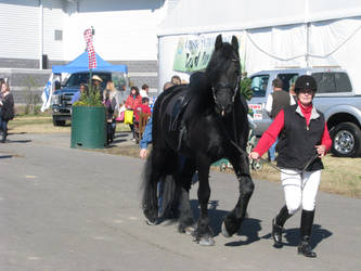 Friesian with tack by Night-Mother-Stock