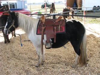 Mini pony by Night-Mother-Stock