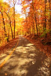 The Road Less Traveled By (Autumn)