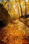 The Road Less Traveled By (Autumn) II