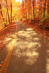 The Road Less Traveled By (Autumn) IV
