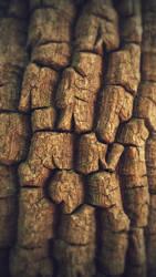 Bark Macro #2