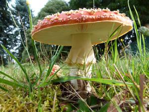 Much room under the magic mushroom