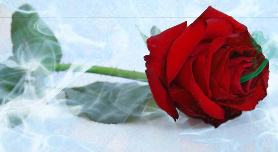 Toxic Rose
