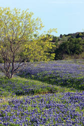 A Texas Spring by wanderingmage