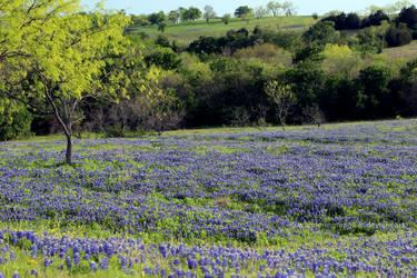 Texas Hills by wanderingmage