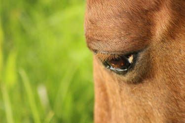 Equine Visions