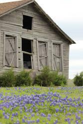 In flowering ruin by wanderingmage