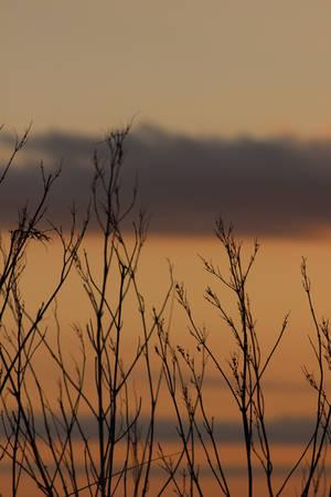 Against a Prairie Sky